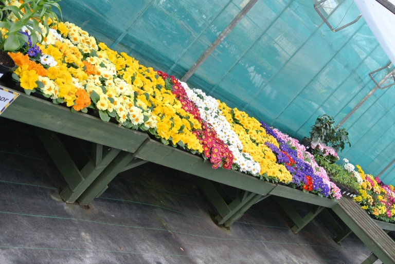 Colorful flowers on a garden center table.