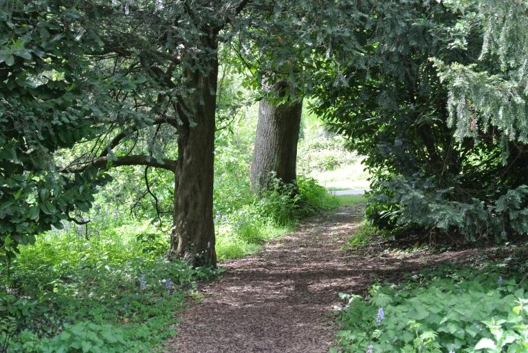 A path through a wood.