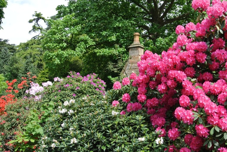 Flowering shrubs.