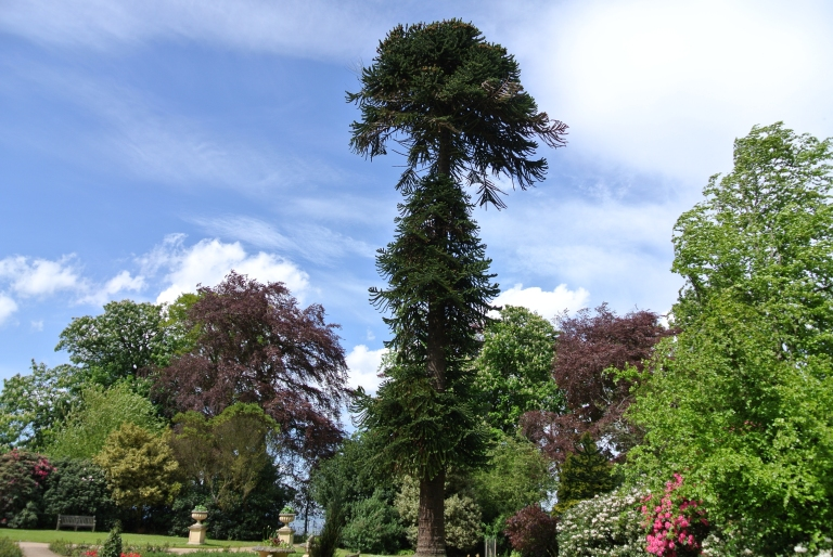 Trees at Lauriston Castle.