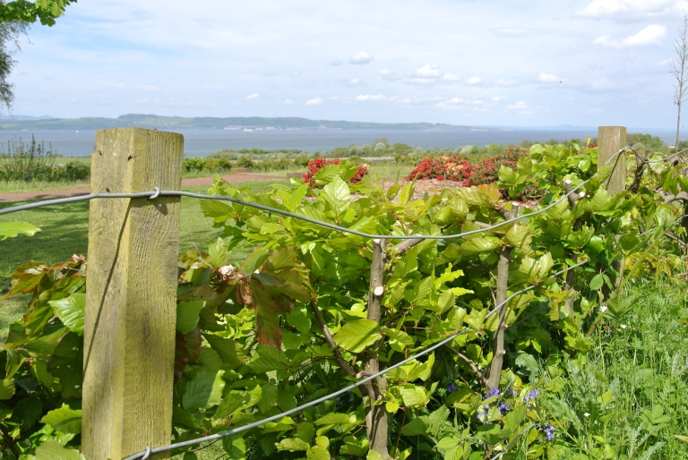A fence, green plants, and the Firth of Forth beyond.