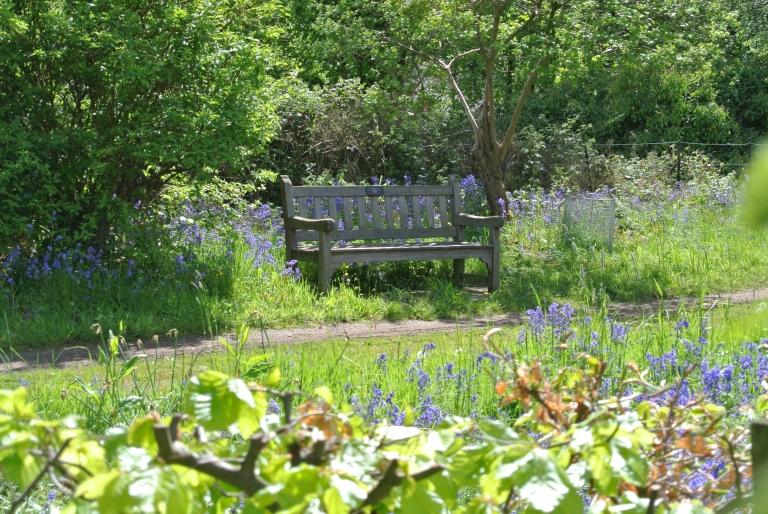 A bench in a garden.