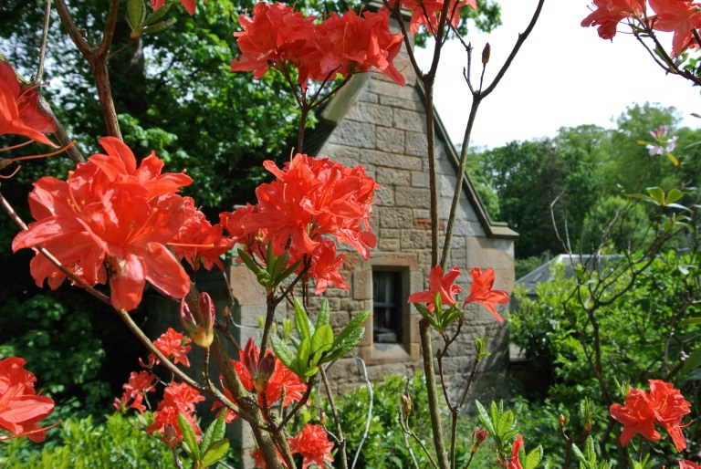 Red flowers and a stone building.