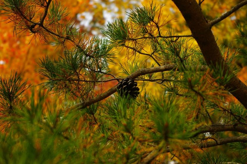 Autumn Fires, by Robert LouisStevenson